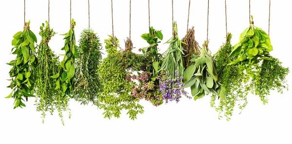 HERBES الأعشاب